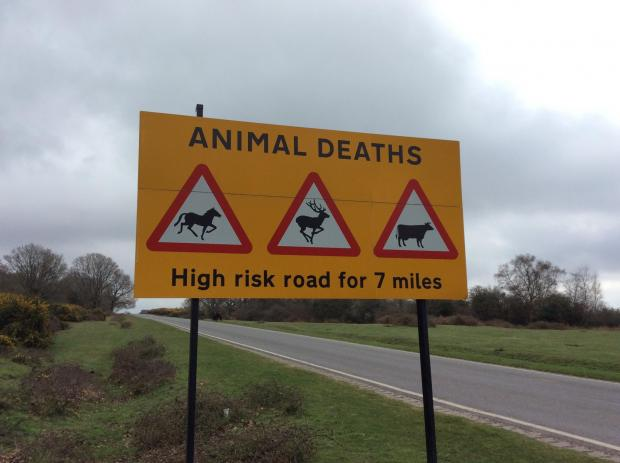 New Forest Post: The Cadnam to Godshill road is one of the worst routes for animal accidents.