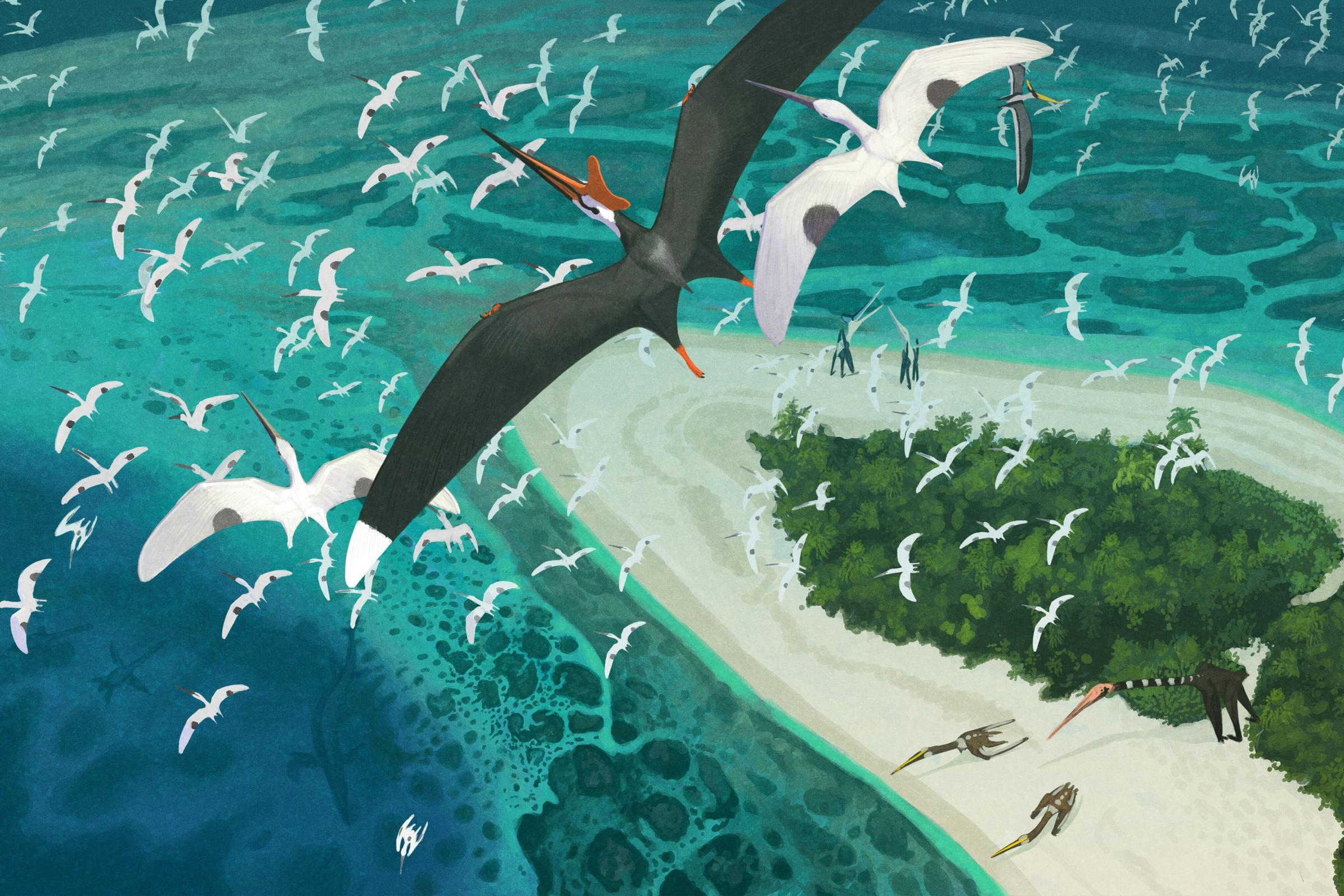 Artist's impression of pterosaurs in flight (John Conway/PA)