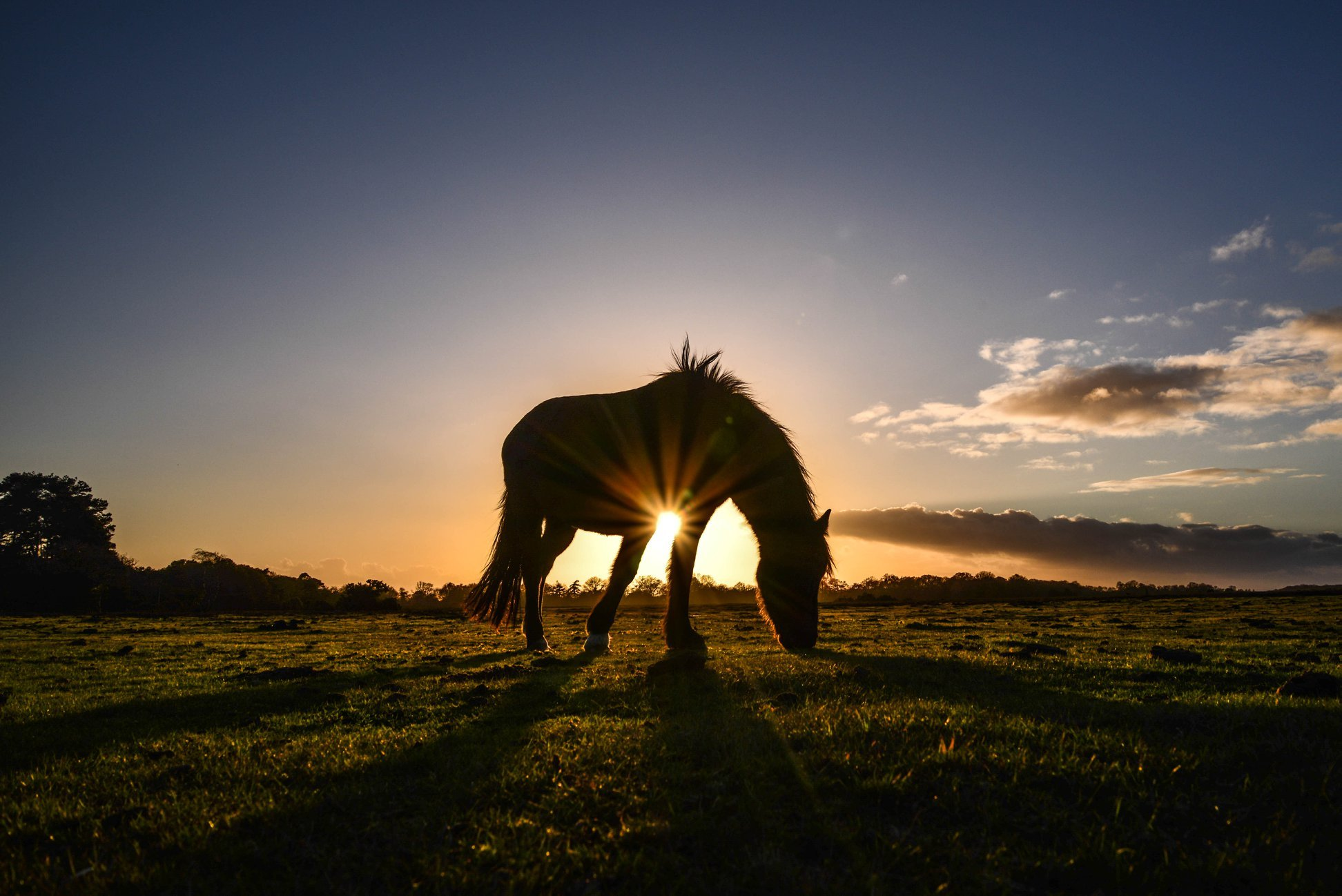 Pny grazing by Peter Miller.