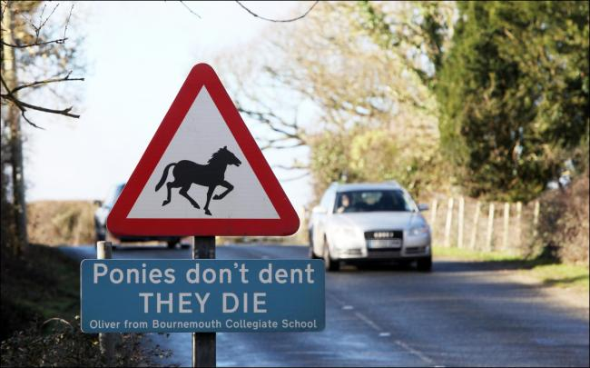 Signs highlight the risk of animal accidents in the New Forest.
